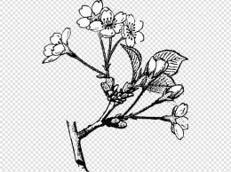 水墨画的中国风樱花